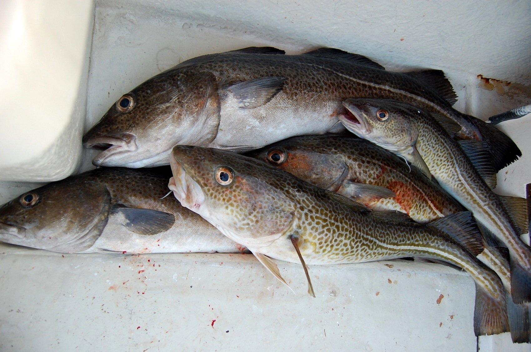 fish ts 0